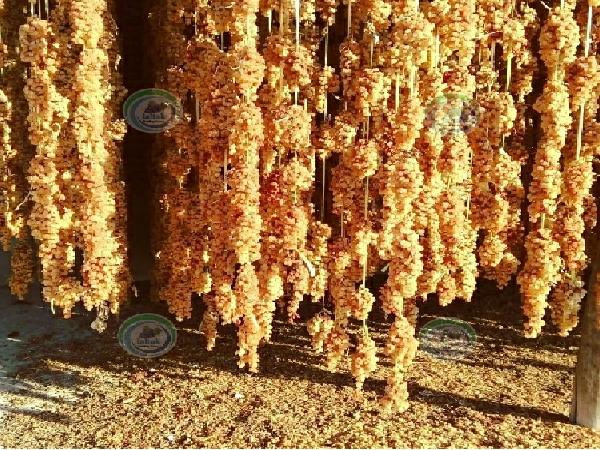 فروش کشمش طلایی صادراتی ایران