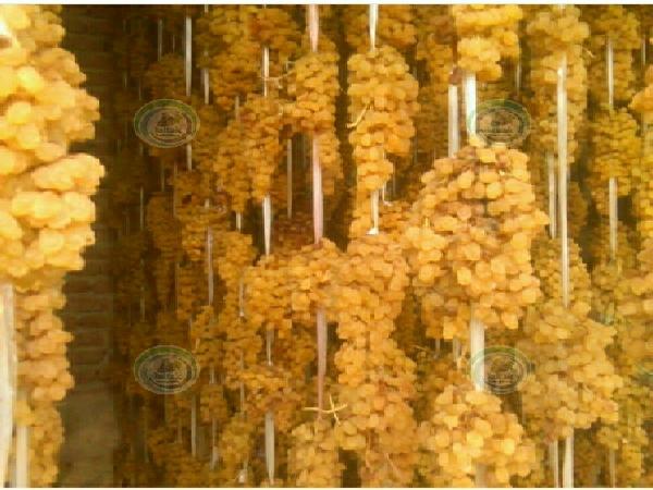 کشمش انگوری صادراتی
