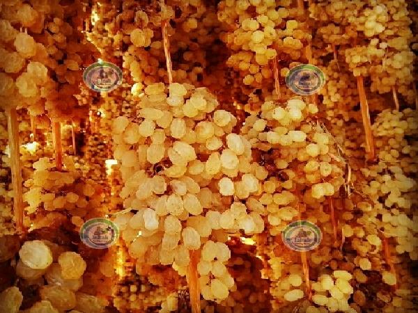 فروش کشمش انگوری صادراتی