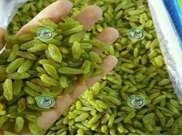 مرکز پخش کشمش سبز آجیلی در بازار
